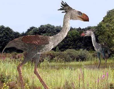 Phorusrhacos - ave prehistorica