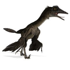 Wellnhoferia - ave prehistorica